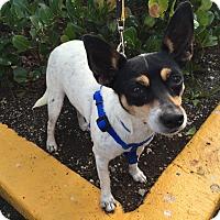 Adopt A Pet :: Sophie - Coral Springs, FL
