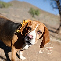 Adopt A Pet :: Ethel - Acton, CA