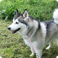 Adopt A Pet :: Mia - Augusta County, VA
