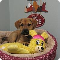 Adopt A Pet :: Peggy - South Dennis, MA