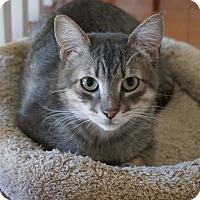 Adopt A Pet :: Simon - El Dorado Hills, CA