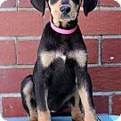 Adopt A Pet :: Jackie