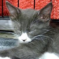 Adopt A Pet :: Duncan - Logan, UT