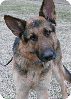 German Shepherd Dog Dog for adoption in Nashville, Tennessee - Windsor