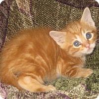 Adopt A Pet :: Arlo - Dallas, TX