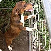 Adopt A Pet :: Jethro - Hazard, KY