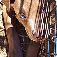 Adopt A Pet :: Winchester big boy - Sacramento, CA
