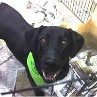 Adopt A Pet :: TY - Fowler, CA