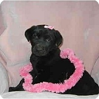 Adopt A Pet :: Delta Dawn - Glastonbury, CT