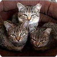 Adopt A Pet :: Mary and Joy - Alexandria, VA