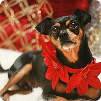 Adopt A Pet :: Larry - Canoga Park, CA