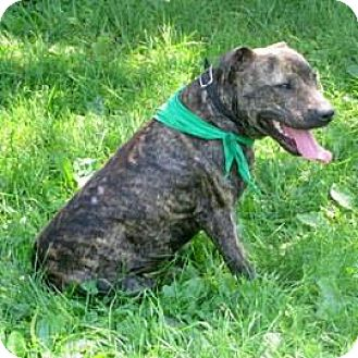 American Pit Bull Terrier Mix Dog for adoption in Janesville, Wisconsin - Kyler