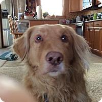 Adopt A Pet :: Bo - Yorktown, VA