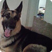 Adopt A Pet :: Dixie - Green Cove Springs, FL