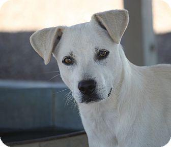 Labrador Retriever Mix Dog for adoption in Jewett City, Connecticut - L.B. Martin