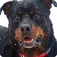 Adopt A Pet :: Jay - Frederick, PA