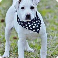 Adopt A Pet :: Ward in CT - Manchester, CT