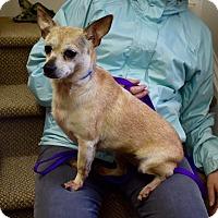 Adopt A Pet :: Tinkerbelle - Washington, DC