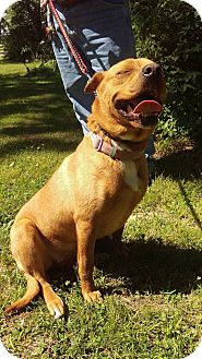 Mastiff/Shepherd (Unknown Type) Mix Dog for adoption in Somonauk, Illinois - Princess
