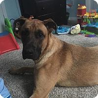Adopt A Pet :: Arthur - Essington, PA
