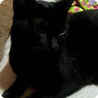 Adopt A Pet :: Misty - El Cajon, CA