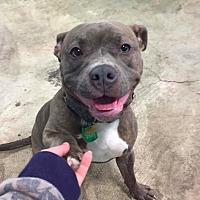Adopt A Pet :: Shadow - Brunswick, OH