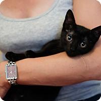 Adopt A Pet :: Moxi - Staten Island, NY