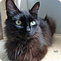 Adopt A Pet :: Abby - Vancouver, BC