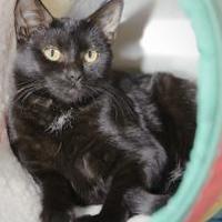 Adopt A Pet :: Malia (9173) - Tinley Park, IL