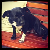 Adopt A Pet :: Remi - Grand Bay, AL