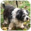 Photo 2 - Lhasa Apso/Terrier (Unknown Type, Small) Mix Dog for adoption in PRINCETON, New Jersey - Sophie