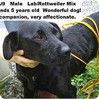 Adopt A Pet :: # 348-09 @ Animal Shelter - Zanesville, OH