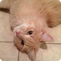 Adopt A Pet :: Jinx - East Hanover, NJ