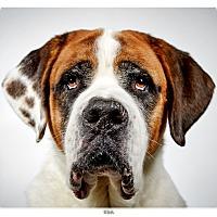 Adopt A Pet :: Titus - New York, NY