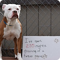 Adopt A Pet :: Buster - Harriman, NY