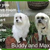 Adopt A Pet :: Buddy and Maxie - Shawnee Mission, KS