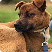 Adopt A Pet :: Cody (Adoption Pending) - Washington, DC
