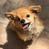 Adopt A Pet :: Bamboo - Fountain Valley, CA