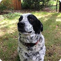 Adopt A Pet :: Lucky - McArthur, CA