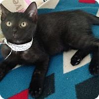 Adopt A Pet :: Sweetie - Seminole, FL