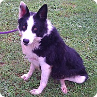 Adopt A Pet :: Stormy - Metamora, IN
