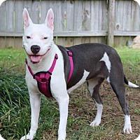 Adopt A Pet :: Lila - Lawrenceville, GA