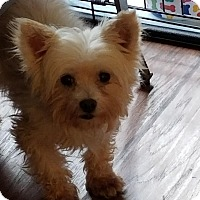 Adopt A Pet :: Little Ceasar - Rochester, NY