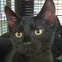 Adopt A Pet :: Bayley - Sarasota, FL