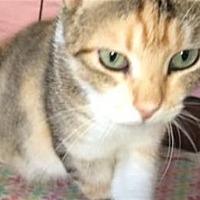 Adopt A Pet :: Kally - Lake Jackson, TX