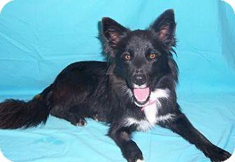 Border Collie Mix Dog for adoption in Larned, Kansas - Annie