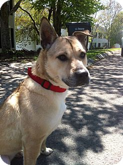 Shepherd (Unknown Type) Mix Dog for adoption in Plainfield, Connecticut - Layla