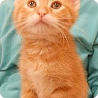 Adopt A Pet :: Garth - Reston, VA