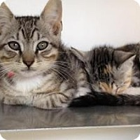 Adopt A Pet :: Louis & Lyla - Winter Haven, FL