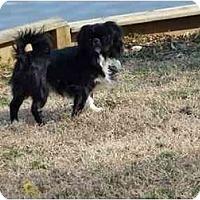 Adopt A Pet :: COBY - Raleigh, NC